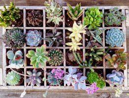 Cactus Story… Une histoire végétale, douce et piquante