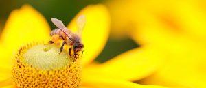 miel fete du miel