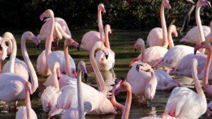 parc ornithologique camargue