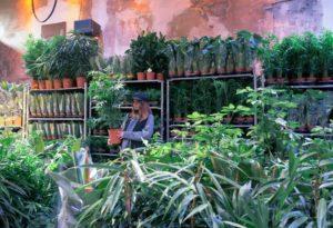 Grande vente de plantes Marseille #2