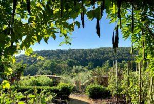 restaurant gastro le jardin de benjamin