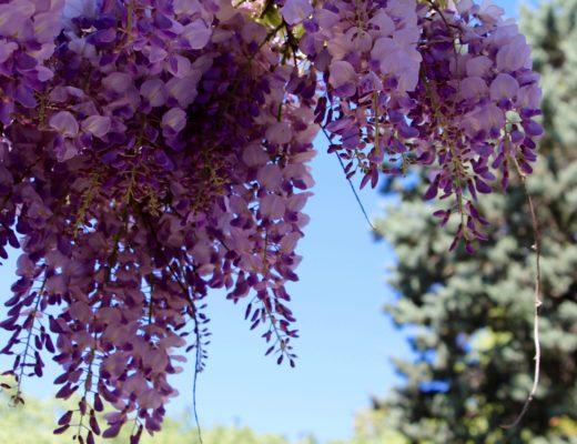 le printemps la belle saison