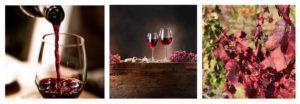 choix d'une cave à vin