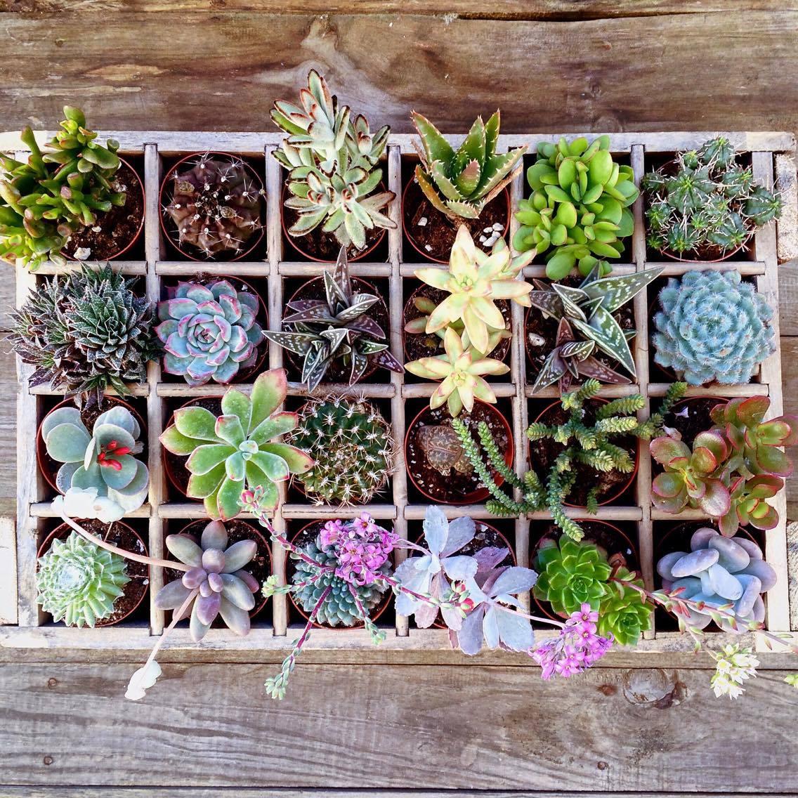Decoration Avec Plantes Grasses cactus story une histoire végétale, douce et piquante